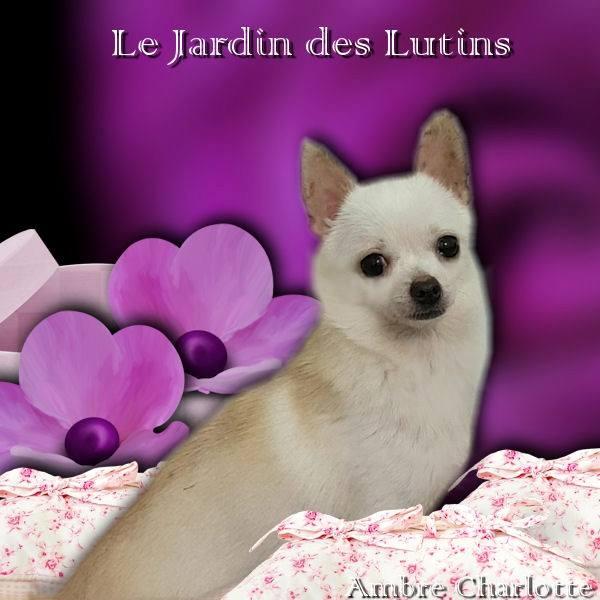 Lady macbeth du Jardin des Lutins