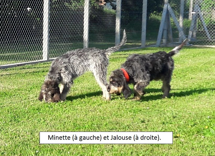 Jalouse du pech de b re chien de race toutes races en tous - France bleu gascogne grille des programmes ...