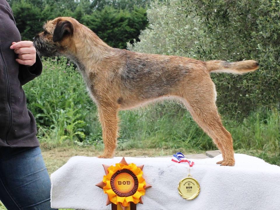 Les Border Terrier de l'affixe Des Brumes De Kalhan