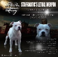 Staffanatic's Lethal weapon