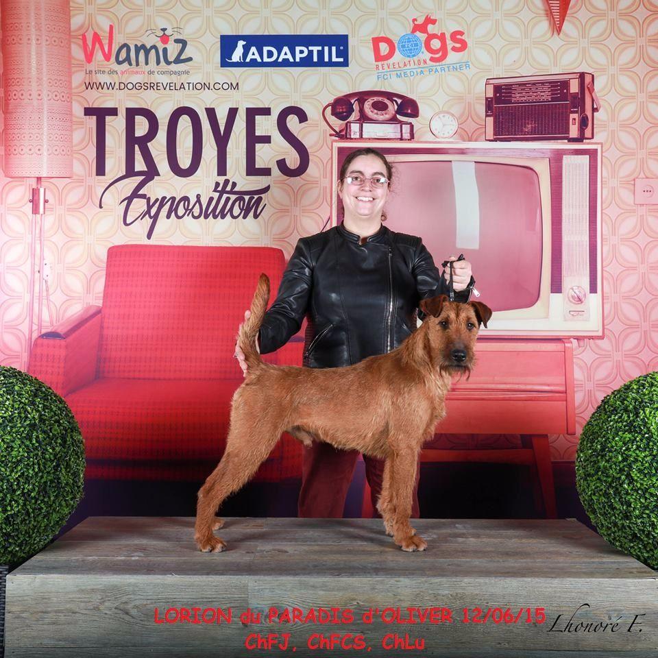 Irish Terrier - CH. Lorion Du Paradis D'oliver