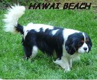CH. Hawaï beach des princes des Cevennes