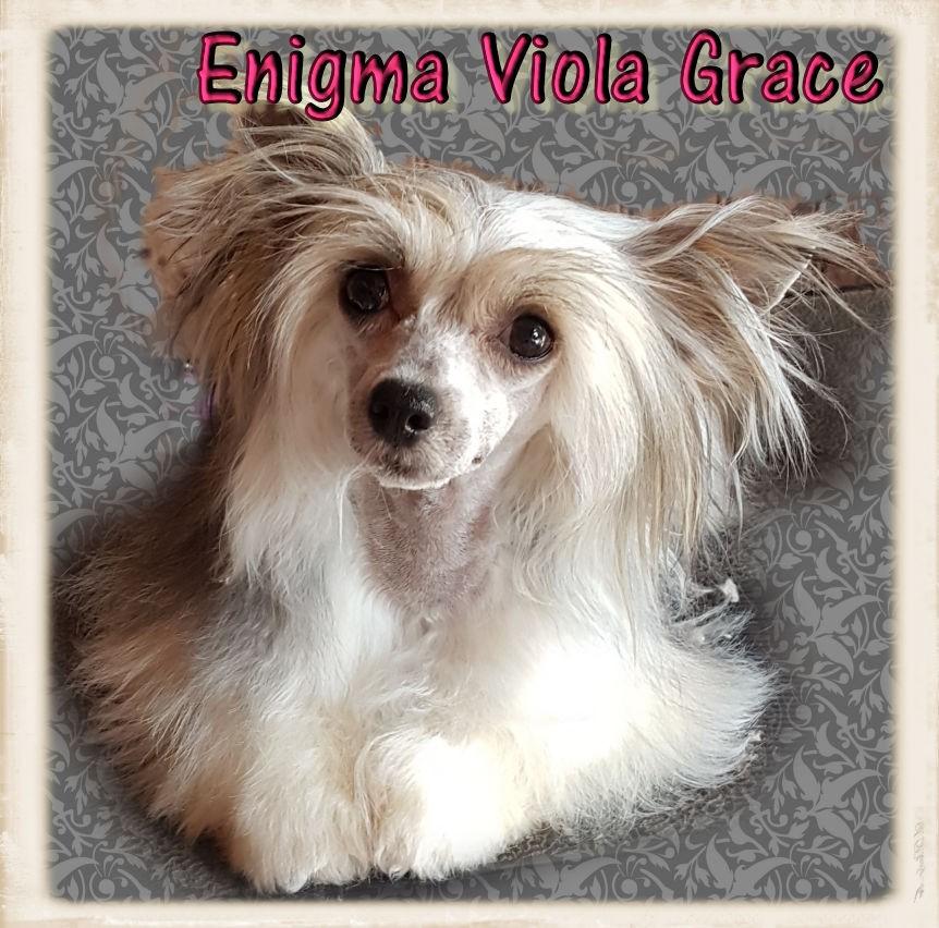 Enigma viola grace
