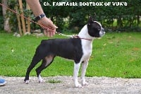 CH. Fantasia bostbox of vuk's