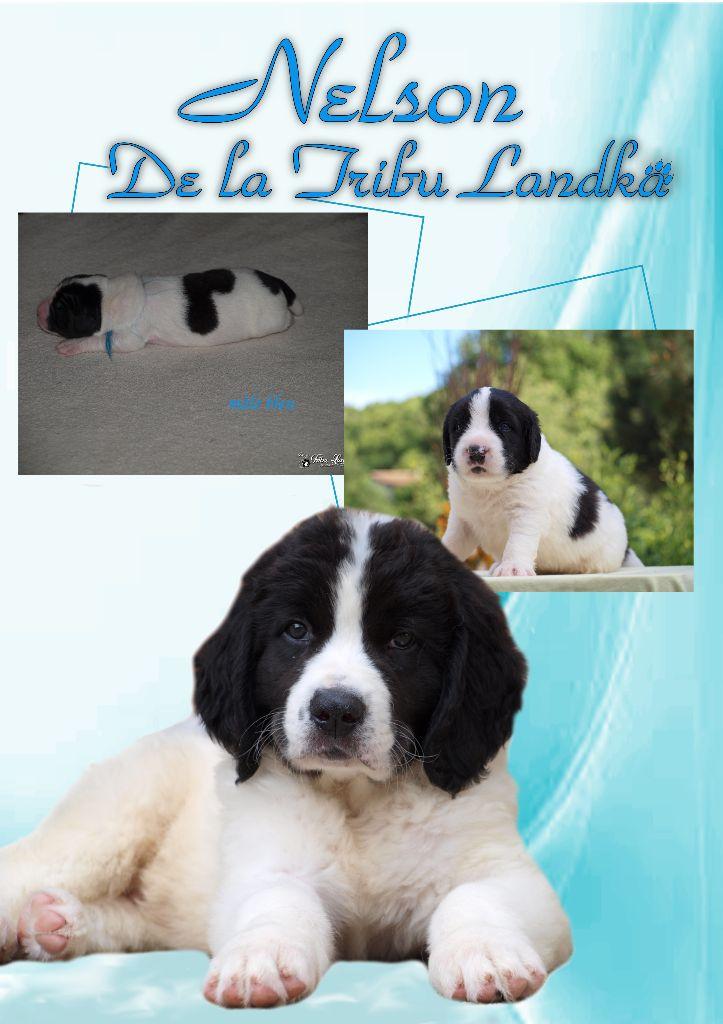 Publication : De La Tribu Landka  Auteur : Tribu Landka