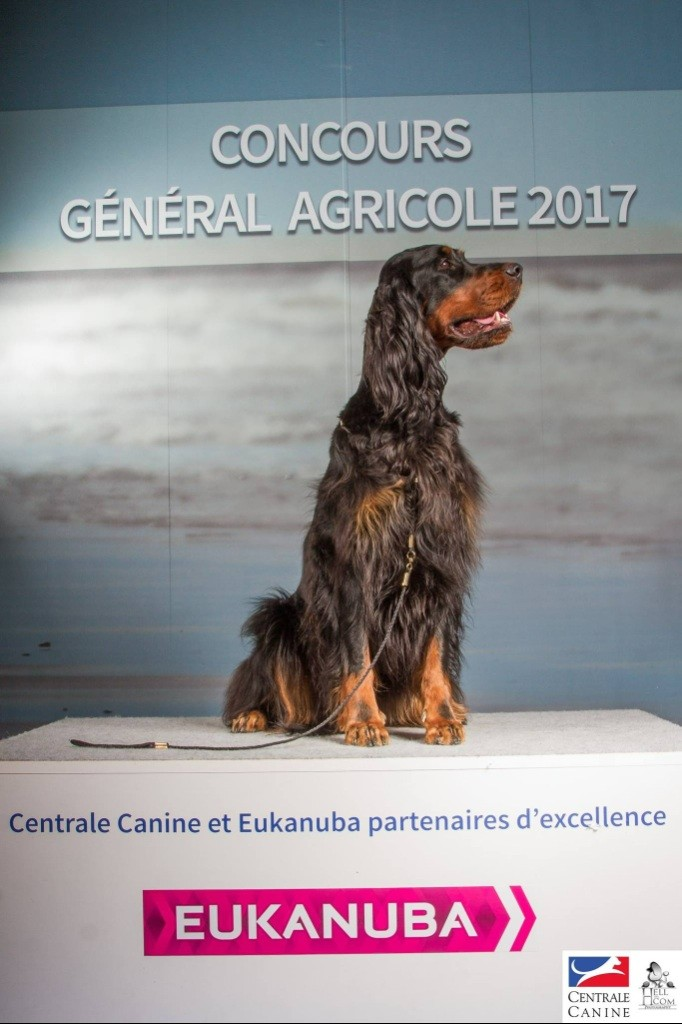 centrale canine 93