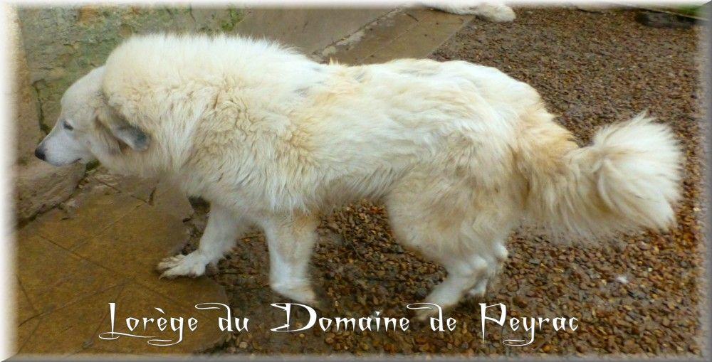 Lorege du Domaine de Peyrac