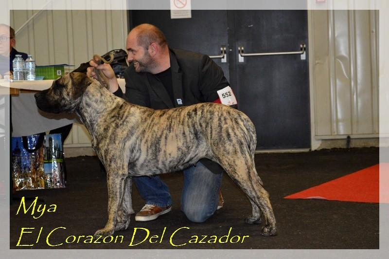 Dogo Canario - Mya El Corazon Del Cazador