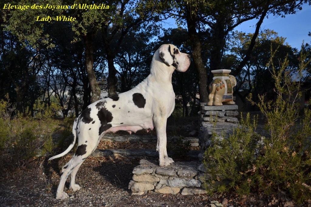 Lady-white des Joyaux d'Allythelia