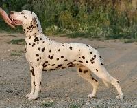 les chiens de florence Indiana