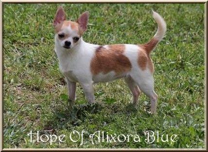 CH. Hope of Alixora Blue