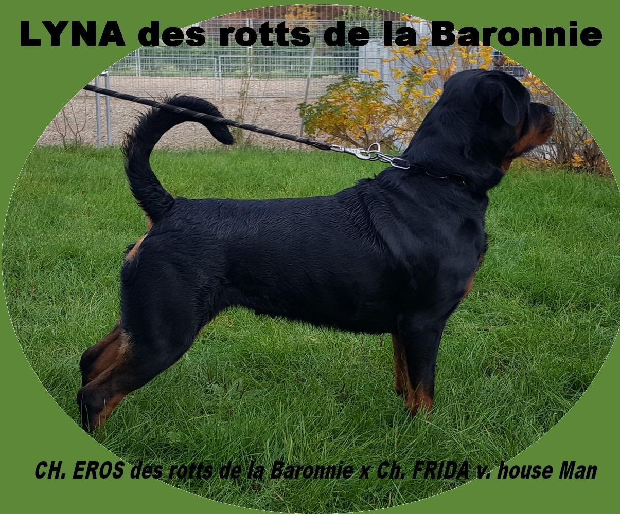 Rottweiler - Lyna des Rotts de la Baronnie