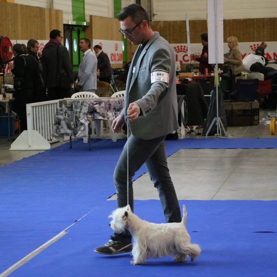 West Highland White Terrier - Easy Jon's Lady lollypop