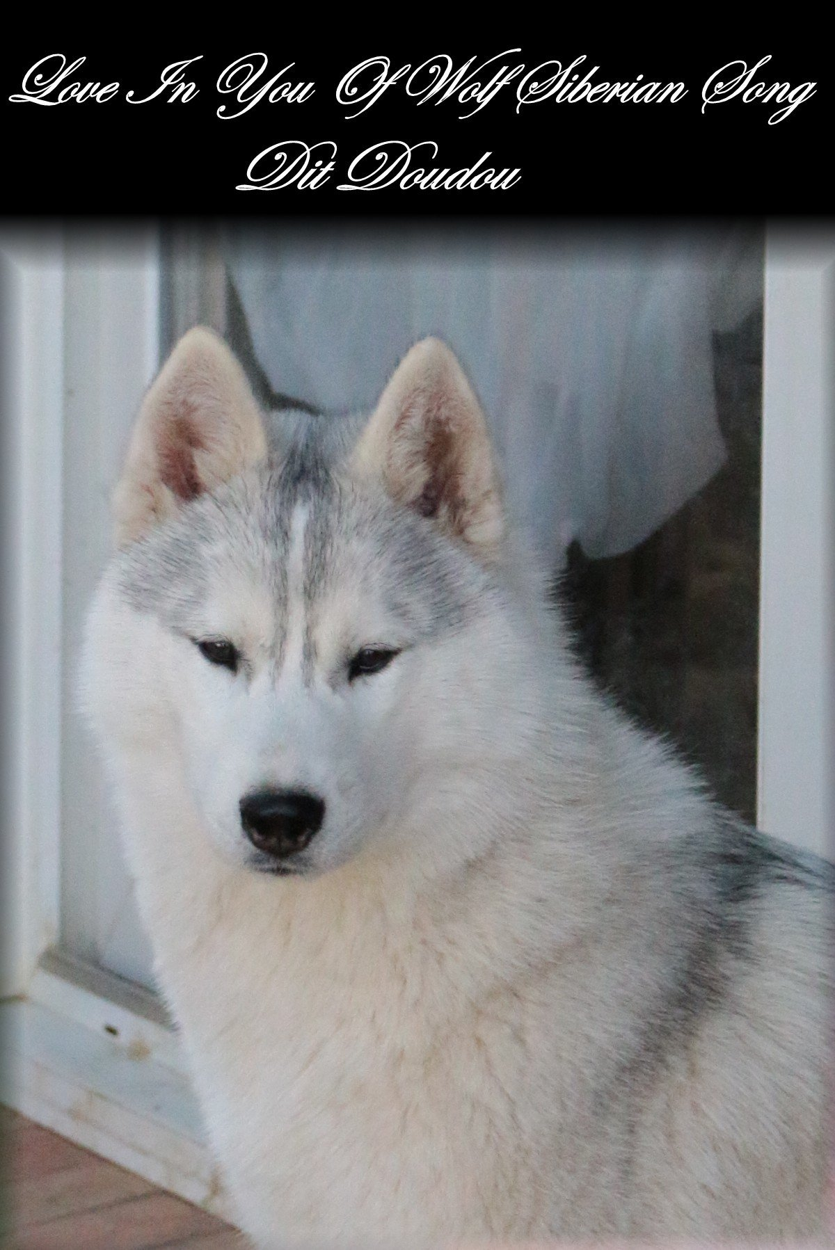 Lives in you Of Wolf Siberian Song Siberian Husky