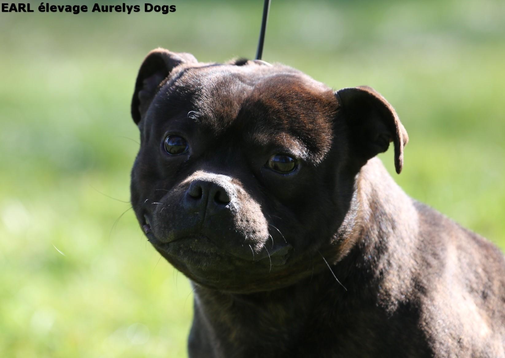 Publication : Aurely's Dogs  Auteur : EARL élevage Aurelys Dogs
