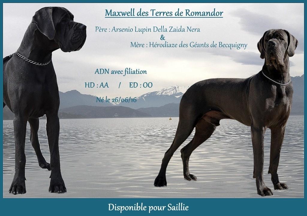 Maxwell Des Terres De Romandor
