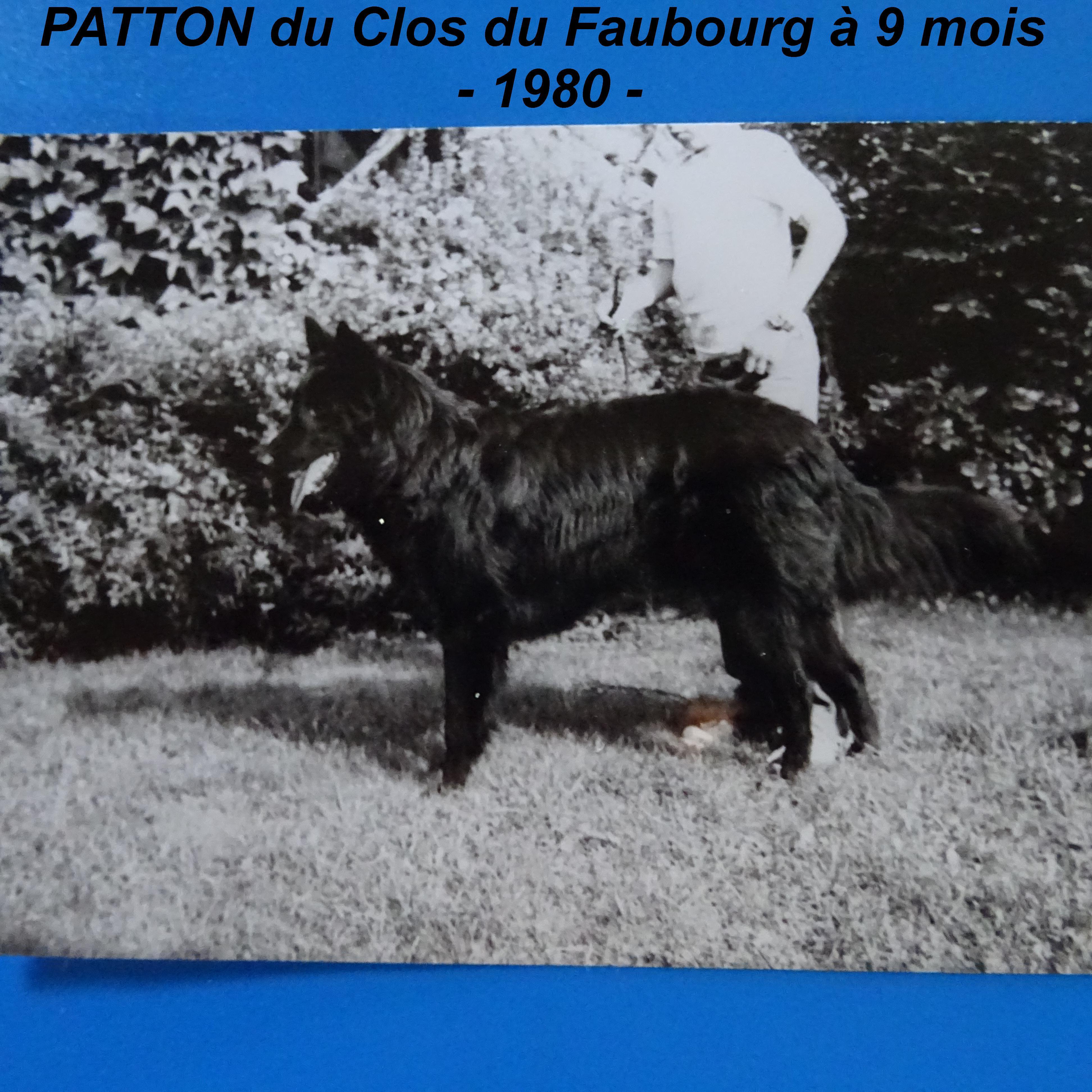 Berger Belge - Patton Du clos du faubourg