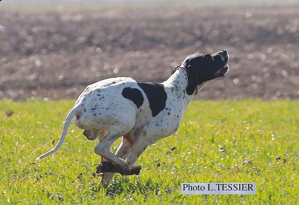 Publication : du mas du zouave  Auteur : L. Tessier
