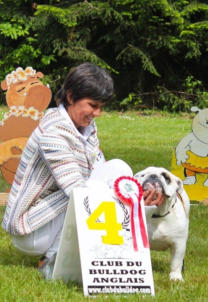 Les Bulldog Anglais de l'affixe des Ulyskanes du Fleury