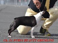 CH. Ja furia beauty gremlins