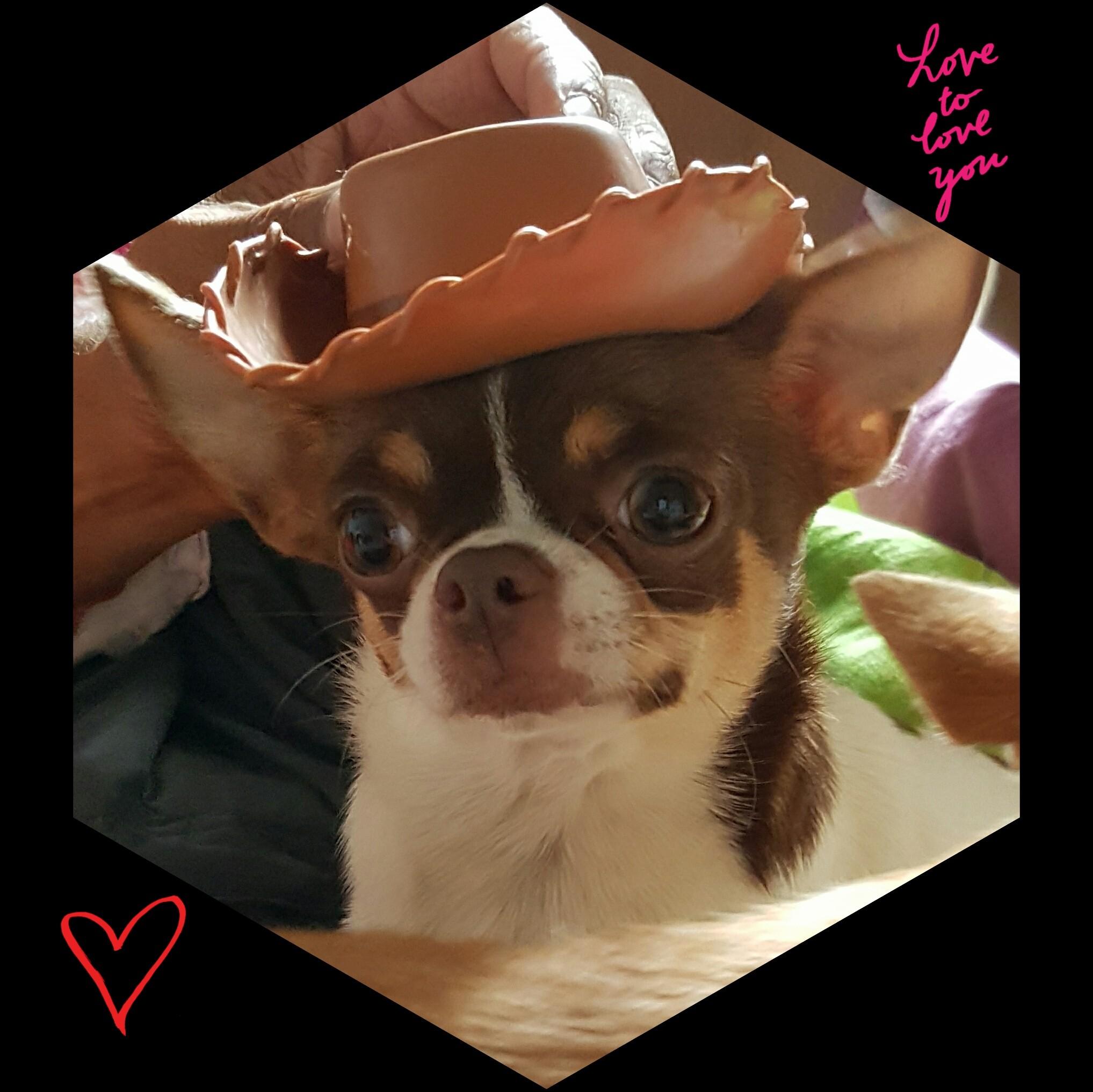 Chihuahua - Mademoiselle chante le blues De L'Eden Des Petits Precieux