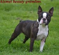 Kismet beauty gremlins