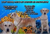 Last corail song Du mazage de mascayenne