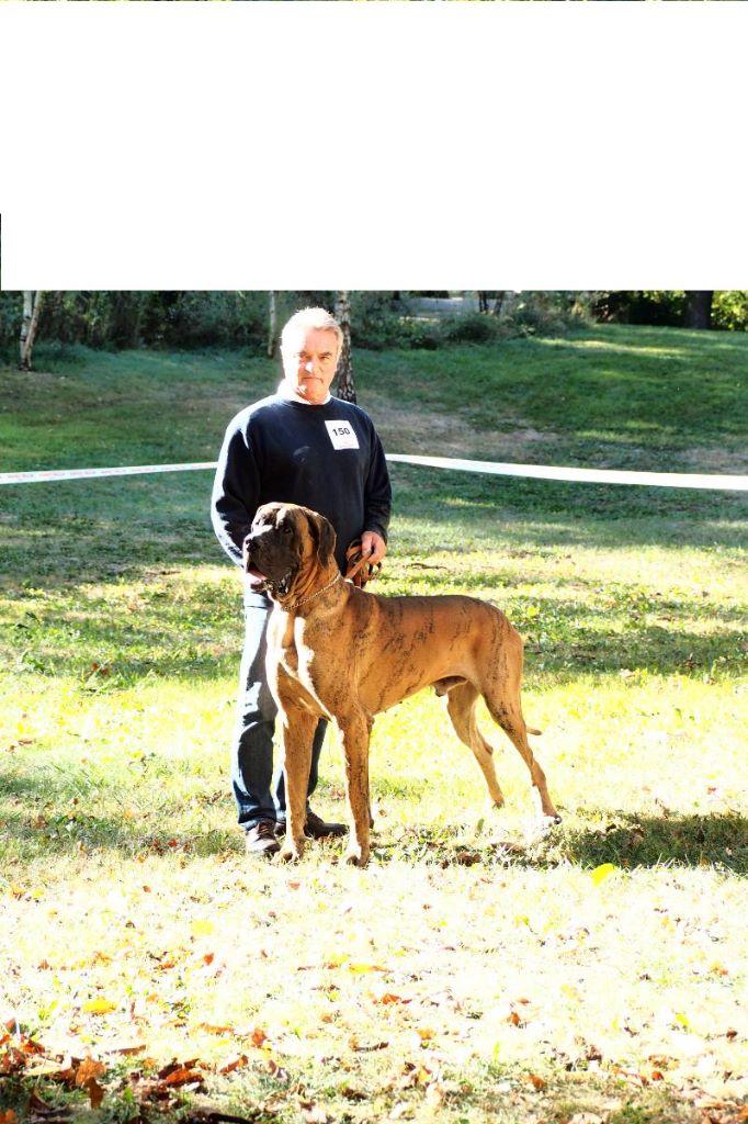Dogue allemand - Larson Du parc des vaux