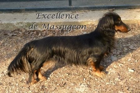 Excellence de Massugeon