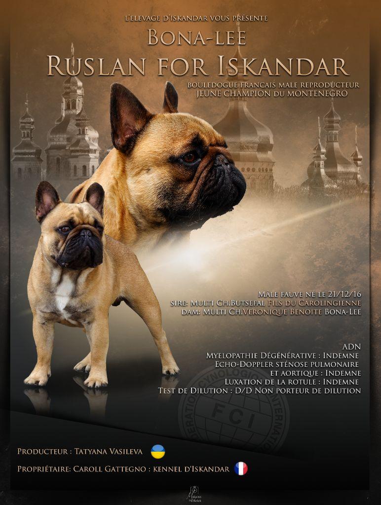 Les Bouledogue français de l'affixe d'Iskandar