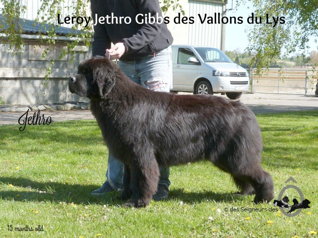 Terre-neuve - Leroy jethro gibbs des vallons du lys