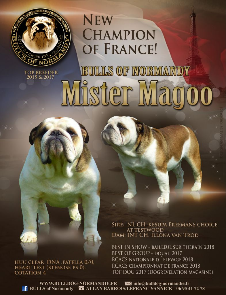 CH. Mister magoo Bull's of Normandy
