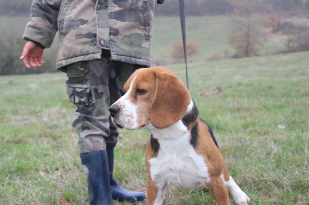 Les Beagle de l'affixe de l'antre des jacks