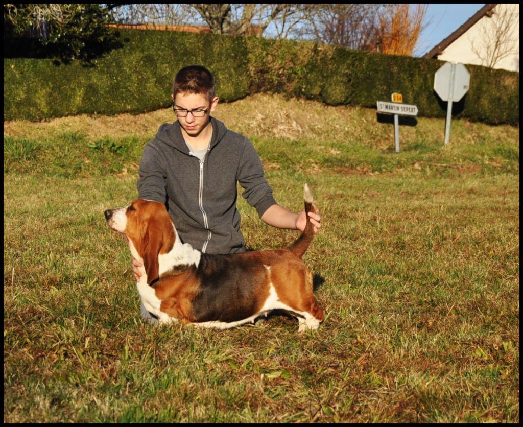 Les Basset Hound de l'affixe des Croqu'n Bulls