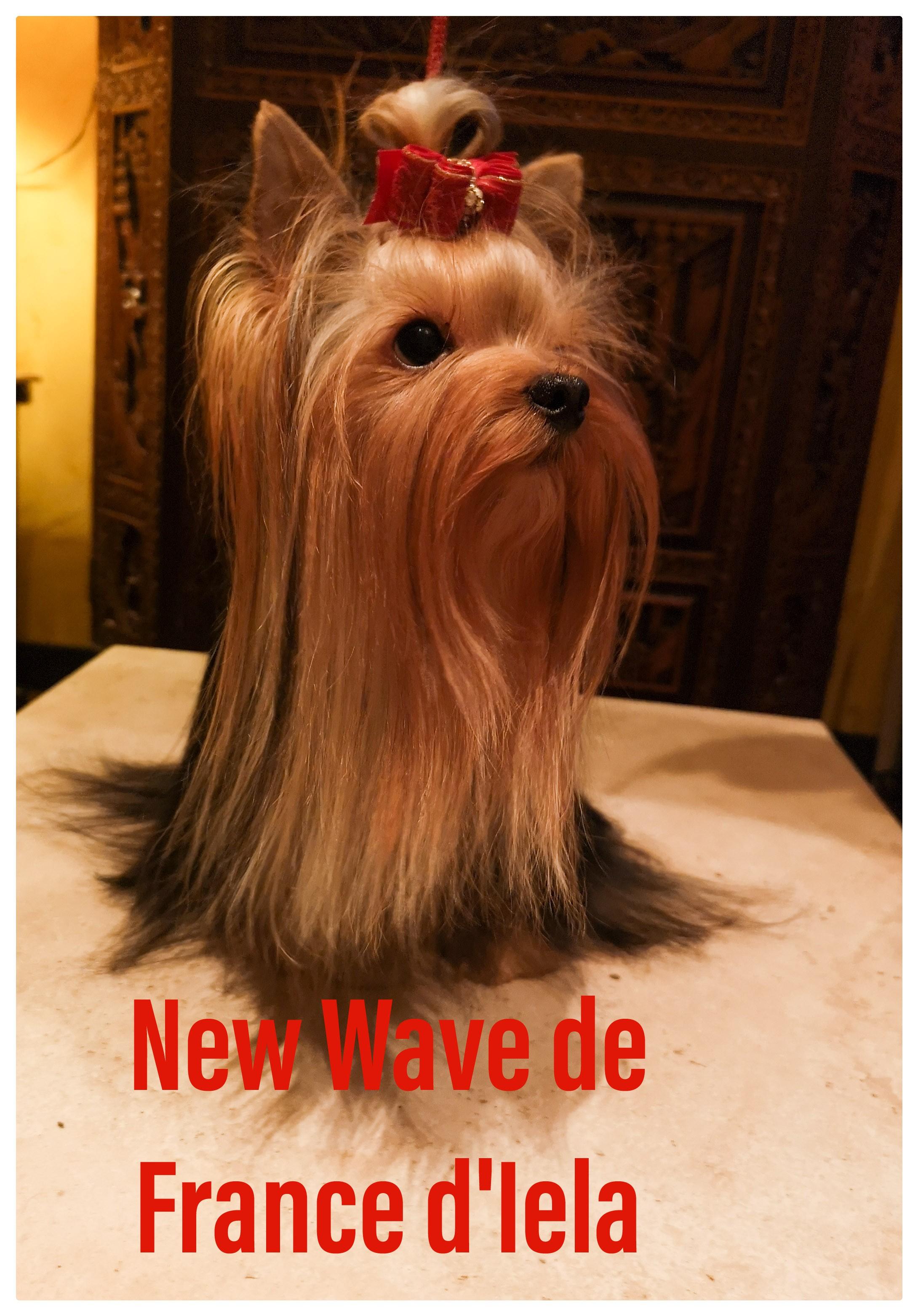 New wave de France D'Iela