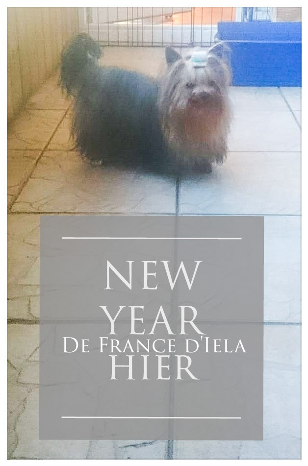 New year de France D'Iela