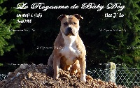J'lo Du Royaume De Baby Dog