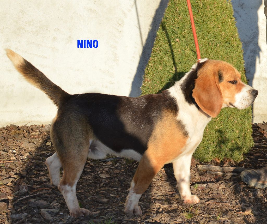 Nino (Sans Affixe)