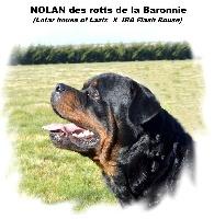 Nolan des Rotts de la Baronnie