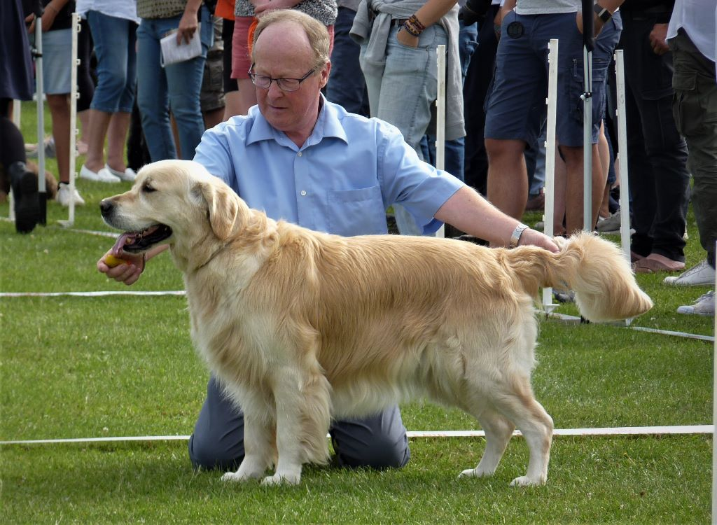 Junior golden feather de la Hêtraie de Berny