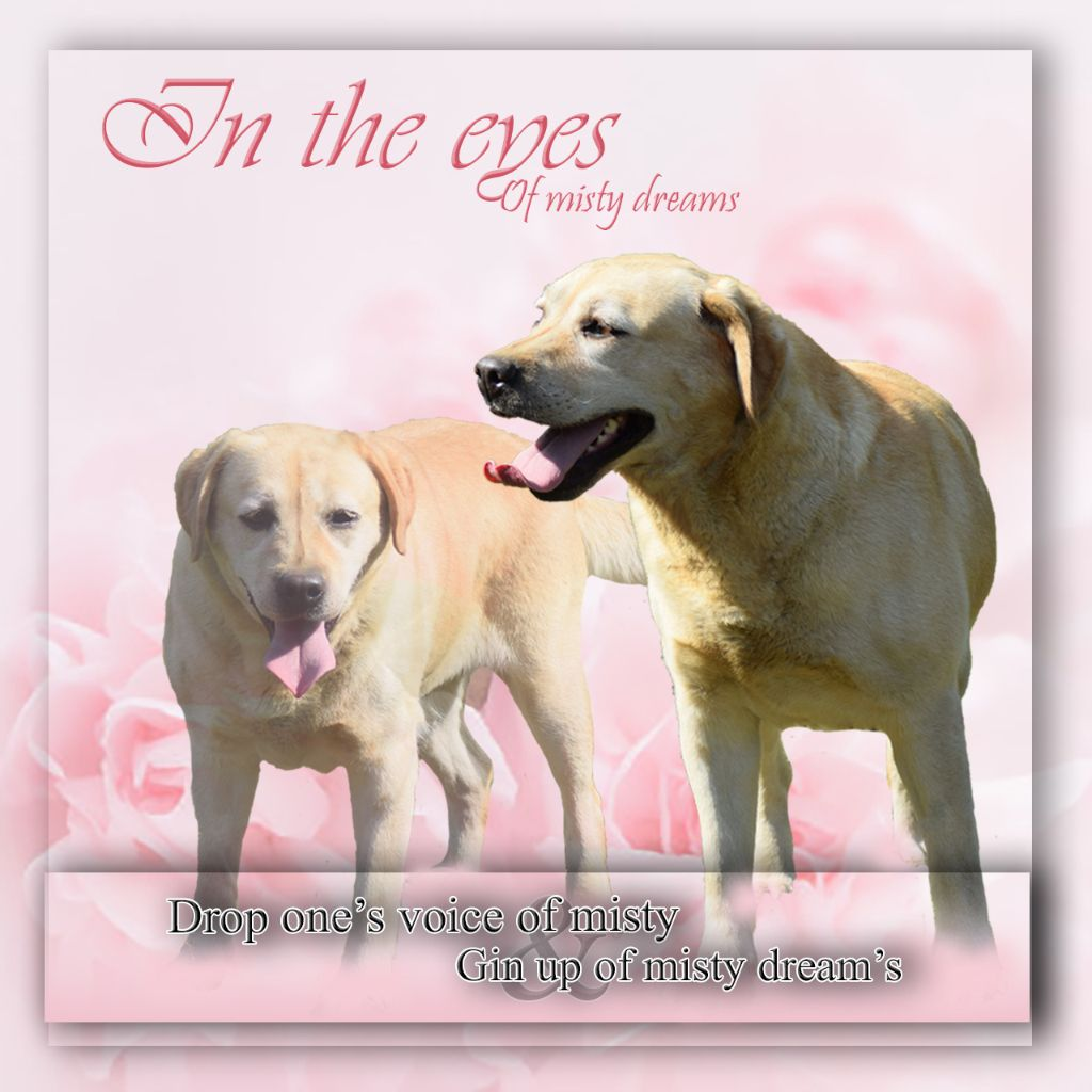 Les Labrador Retriever de l'affixe De La Légion d'Athéna