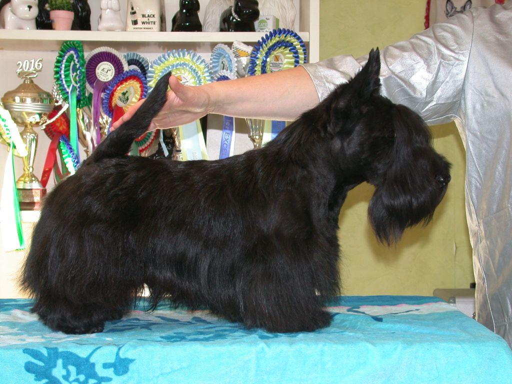 Oskar black beard de Glenderry