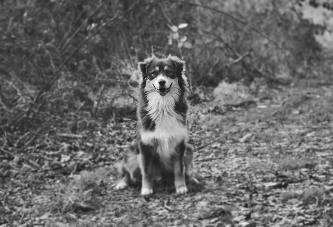 Neverland nana darling du chemin des korrigans