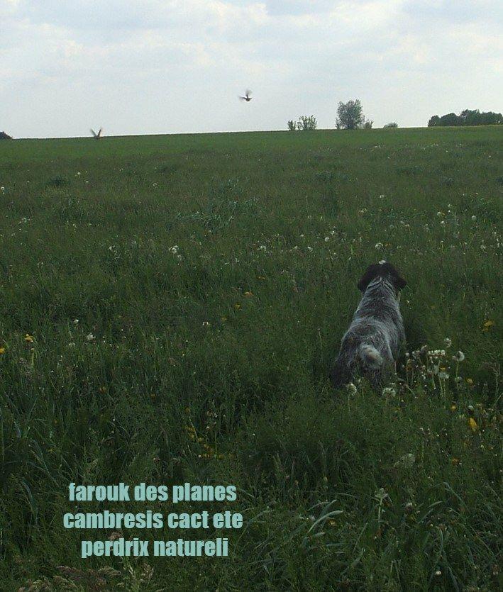Farouk cacs ne cacit ete bicp 3 cact gn des Plaines du Cambresis