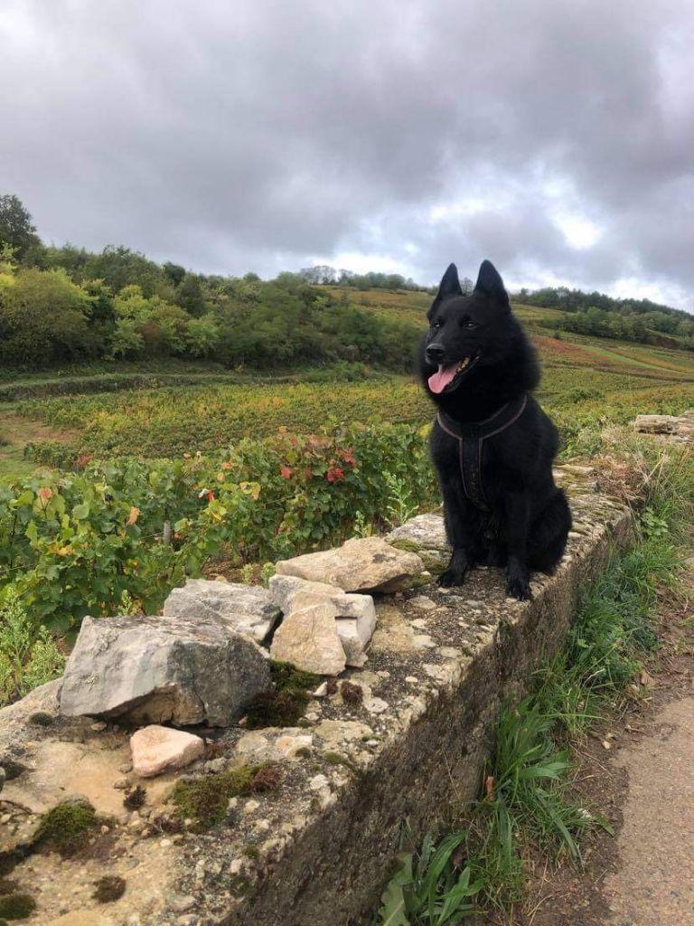Joey de la vallée de la Creuse