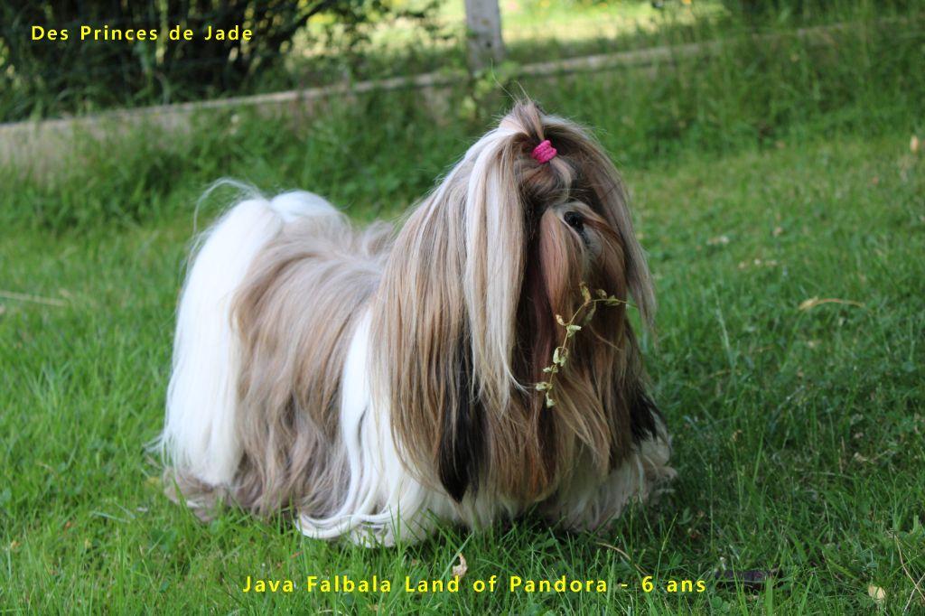 Java falbala Land Of Pandora