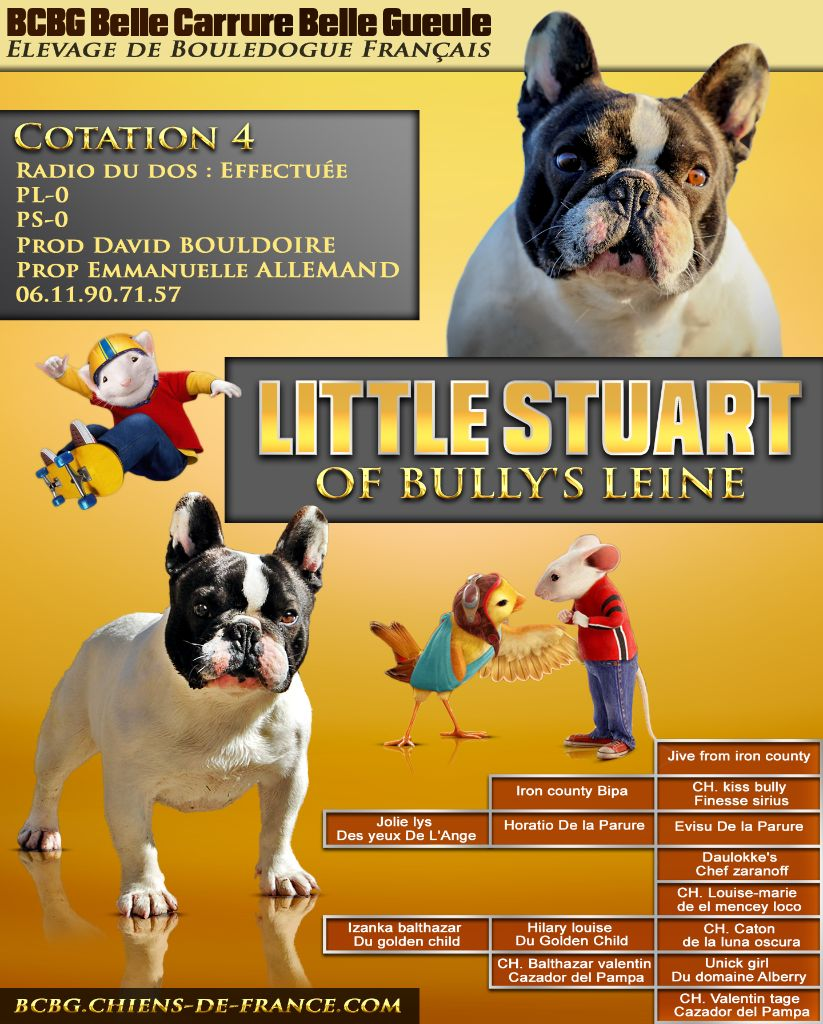 Little stuart Of Bully's Leine