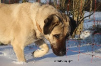 N'firtina The Legend Of Kangal