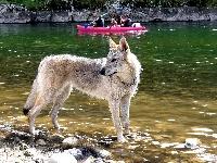 Obsession de la louve blanche
