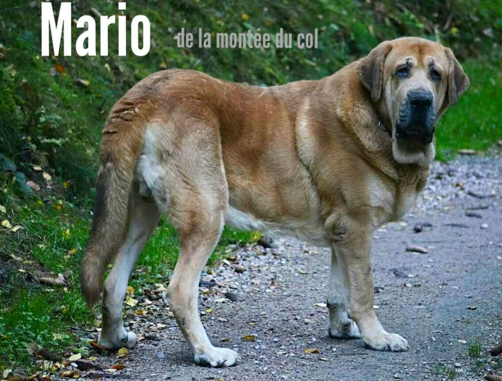 Mario de la Montée du Col